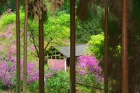 春天开满鲜花的乡村农家