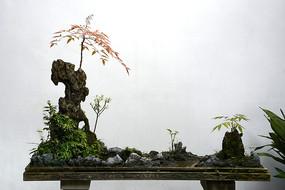 山石造景盆景