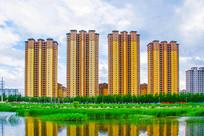 万水河对岸高层建筑与水草