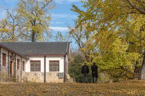 银杏乡村的金色秋天