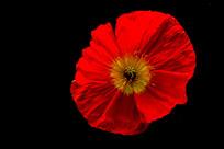 黑背景的红花