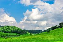 蓝天白云下的牧场
