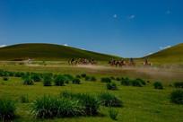 草原上纵马驰骋
