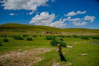 大草原骑马