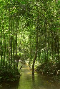 贵州荔波小七孔水上森林小河