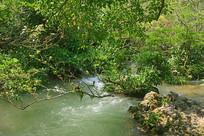 贵州荔波小七孔水上森林溪流