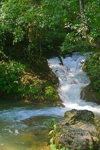 贵州荔波小七孔水上森林溪水
