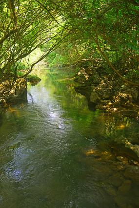 荔波小七孔林间溪水