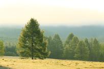 大兴安岭树林云雾