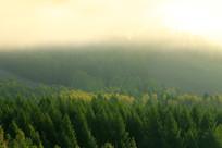 山林晨雾风景