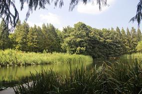 城市湿地森林