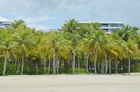 海南海滩沙滩海边椰树图片
