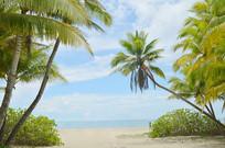 海南海滩沙滩椰树图片