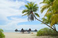 海滩沙滩海边椰树图片