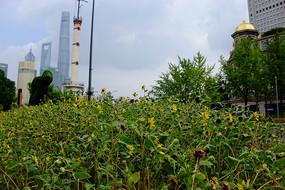 景观绿植后看陆家嘴建筑