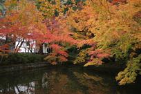 日本京都清水寺枫叶湖水倒影