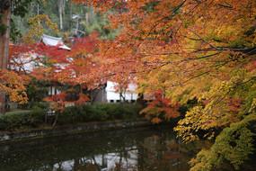 日本京都清水寺秋季枫叶
