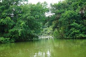 小鸟天堂丛林