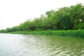 星湖湿地公园湖泊