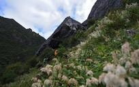 夏季鲜花盛开的墨尔多神山