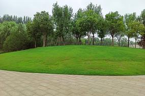 公园里的草坪和绿植