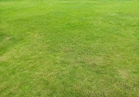 绿色草坪大图