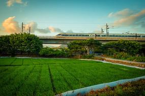 高铁火车下的田园