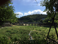 新会玉湖景区绿化