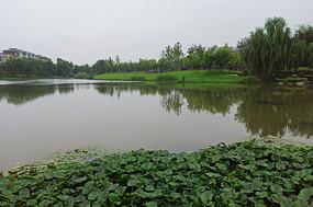 公园绿植风景