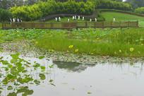 城市水景园林