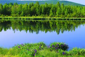 大兴安岭蓝湖绿树林