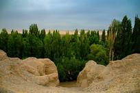 戈壁滩绿树
