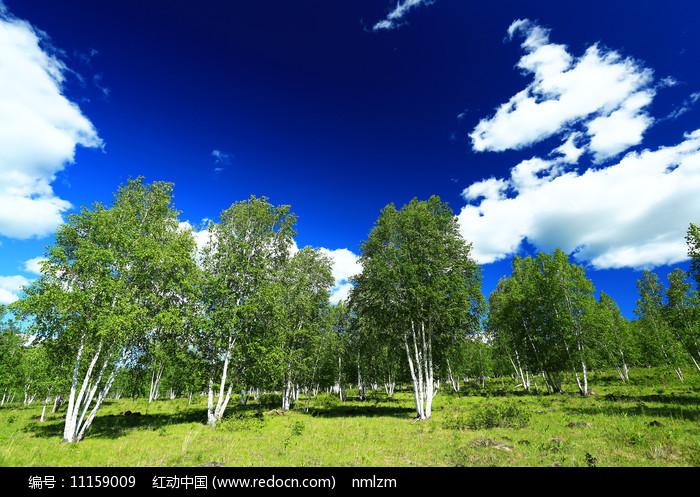 呼伦贝尔桦林云景图片