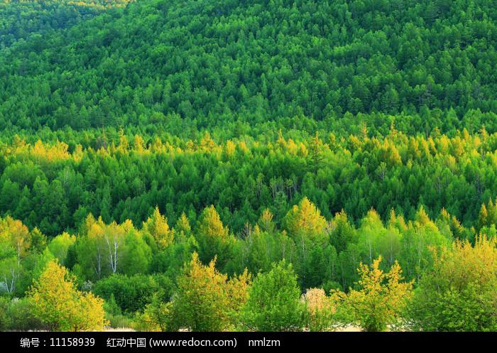 茂密的绿色林海图片