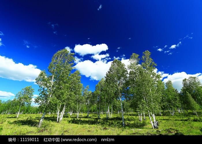 原野桦林云景图片