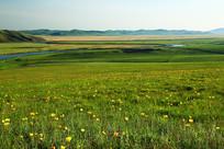 草原牧场野花开