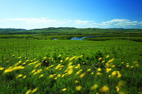 呼伦贝尔草原草甸