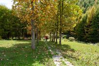 重庆巫山梨子坪林场树木