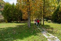重庆巫山梨子坪绿林