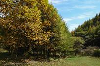 重庆巫山梨子坪绿色自然环境