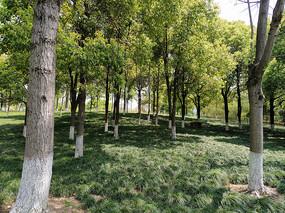 人造绿化树林