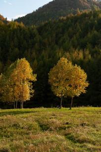 巫山梨子坪阳光森林和草地