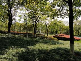 夏天的树林