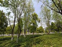 植物公园树林