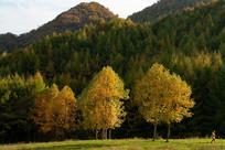重庆巫山梨子坪阳光森林