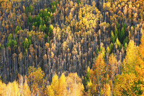 大兴安岭林区秋季彩林