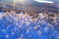 大兴安岭原始森林冰雪风光