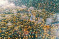 航拍长白山彩林河湾晨雾