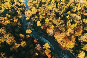 航拍长白山林区秋季小溪