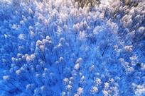 航拍雪野树林雾凇